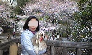 桜チェック4